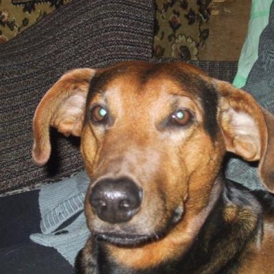 Демодекоз собак - этиология, патогенез и лечение.